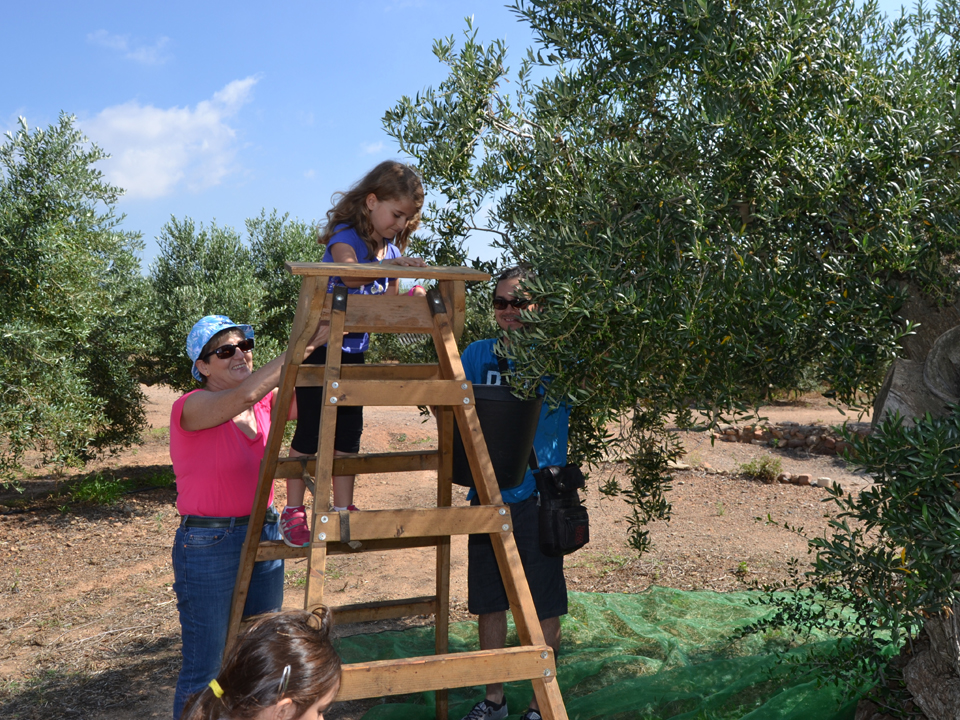 Visita riudecanyes oleoturismo en familia 2